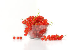 Fresh red currant berries Stock Images