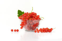 Fresh red currant berries Royalty Free Stock Images