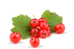 Fresh red currant berries with stem and leaf isolated on white Royalty Free Stock Photography