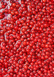 Fresh red currant berries in water Stock Photography