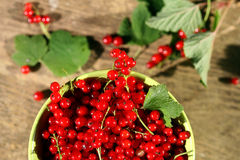 Fresh red currant. Stock Photos