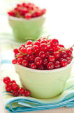 Fresh red currant in the bowl. Fresh red currant in a bowl Royalty Free Stock Photo