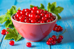Fresh red currant in bowl on blue wooden background. Stock Images