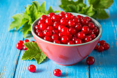 Fresh red currant in bowl on blue wooden background. Royalty Free Stock Images