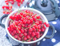 Fresh red currant Stock Images