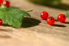 Fresh red currant in bowl. Stock Image