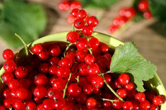 Fresh red currant in bowl. Royalty Free Stock Photography