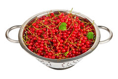 Fresh red currant in colander Stock Images