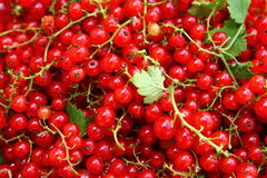 Fresh red currant. Fresh and delicious red currant from my garden Royalty Free Stock Photos
