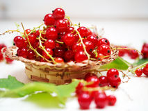 Fresh red currant Stock Photos