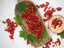 Fresh red currant Royalty Free Stock Photo