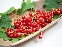Fresh red currant Royalty Free Stock Images