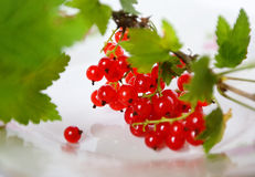 Fresh red currant fruit. On a plate Royalty Free Stock Images