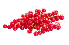 Fresh red currant Stock Image