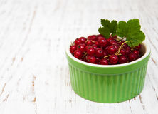 Fresh red currant Royalty Free Stock Photos