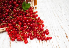 Fresh red currant Royalty Free Stock Image