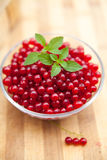 Fresh red currant Royalty Free Stock Photography