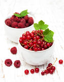 Fresh red currant and raspberries Stock Images