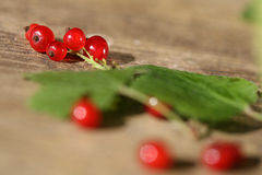 Fresh red currant. Royalty Free Stock Images