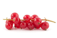 Fresh Red Currants Royalty Free Stock Photos