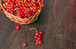Fresh red currants Royalty Free Stock Photo