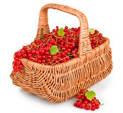 Fresh red currants in a basket Stock Images