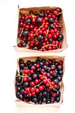 Fresh red currants and black trays royalty free stock image