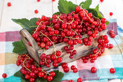 Fresh Red Currants in a box Stock Images