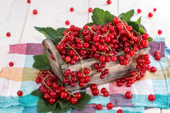 Fresh Red Currants in a box Stock Photography
