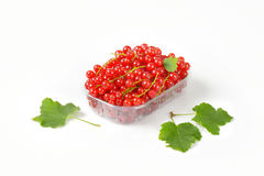 Fresh red currants Royalty Free Stock Images