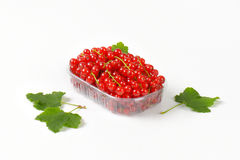 Fresh red currants Royalty Free Stock Image