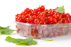 Fresh red currants Royalty Free Stock Photography