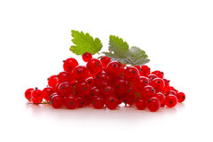 Fresh red currants . Stock Photos