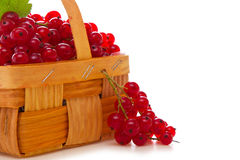 Fresh red currants in the fruit basket. Stock Photo