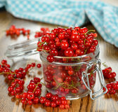 Fresh red currants Stock Photo