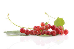 Fresh red currants. With leafs over white background Royalty Free Stock Images