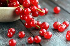 Fresh red currants on light rustic table. Healthy summer fruits.  royalty free stock photography