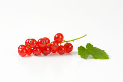 Fresh red currants Stock Photos