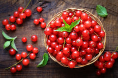 Fresh red currants Stock Images