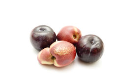 Fresh Red Dark Plums with Nectarine Stock Image