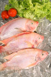 Fresh Red fish Stock Photos