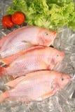 Fresh Red fish Stock Photos