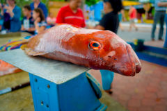 Fresh Red fish at the fish market Royalty Free Stock Photo