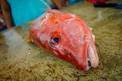 Fresh Red fish at the fish market Stock Images
