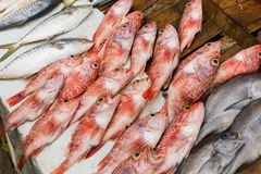 Fresh red fish royalty free stock photo