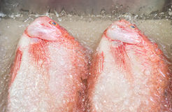 Fresh red fish Royalty Free Stock Photography