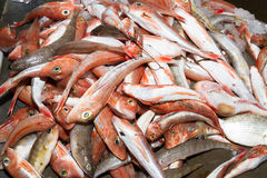 Fresh red fish variety Stock Photos