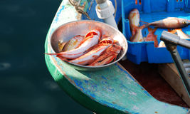Fresh red fishes Royalty Free Stock Photo