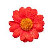 Fresh Red Flower Stock Photo