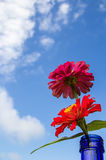 Fresh red flower with blue sky background Royalty Free Stock Photos